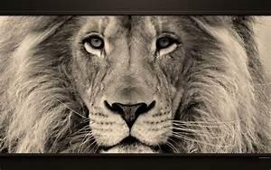 Tableau Lion Noir Et Blanc : tableau animaux sauvages noir et blanc hs51 montrealeast ~ Dallasstarsshop.com Idées de Décoration