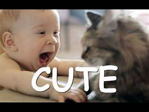 Babies Laughing Hysterically At Dogs And Cats Compilation ...