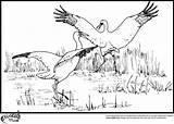 Coloring Stork Storks Popular sketch template