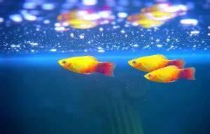 Welche Fische Passen Zusammen Aquarium : nano aquarium nano aquaristik nanoaquarium kaufen shop ~ Lizthompson.info Haus und Dekorationen