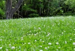 5 favourite lawn substitutes