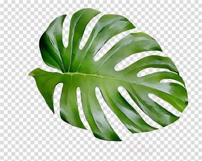 Leaf Transparent Leaves Plant Clipart Plants Cheese