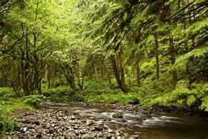 Rock Creek Area Siuslaw National Forest Oregon Cental Coast-1568_69_70 ... Oregon