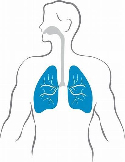 Lungs Human Vector Respiratory Cartoon Clipart Diagram