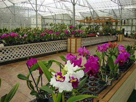 akatsuka orchid gardens akatsuka orchid gardens volcano 2018 all you need to
