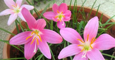 6 simple tips you should about the flower bulbs