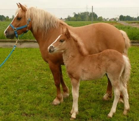horse cloned horses birth facts foal healthy interesting perfectly gives mare mail 2003 italy