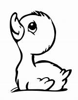 Duck Outline Rubber Clipart Drawing Clip Coloring Pages Library sketch template