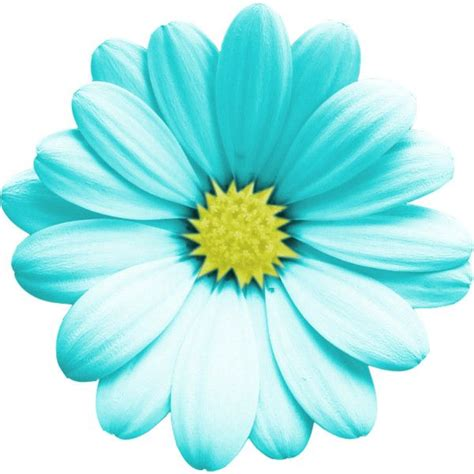 turquoise flower png  turquoise flowerpng