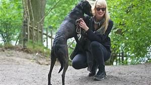 Hund In Mietwohnung Trotz Verbot : wir bellen auf das hundeverbot am schlachtensee b z berlin ~ Lizthompson.info Haus und Dekorationen