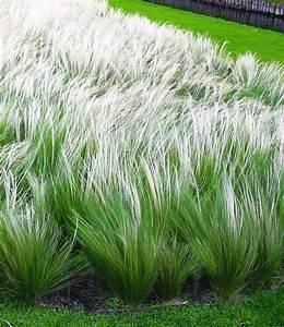 25+ best ideas about Grasses on Pinterest