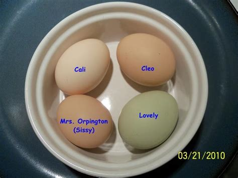 buff orpington egg color orpington egg size