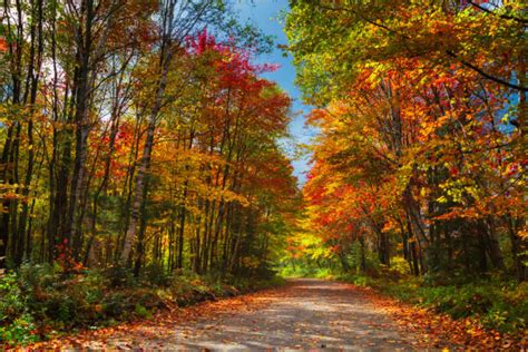 interactive map shows  days   fall foliage