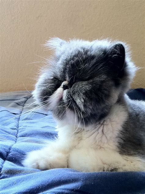 Super Cute Kittens