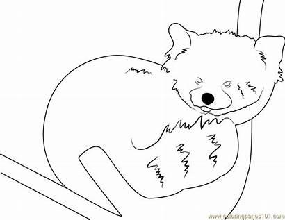 Panda Coloring Pages Graceful Coloringpages101