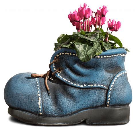 coltivare in vaso come curare i ciclamini in casa vivaio scariot