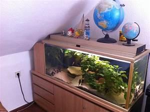 Aquarium Zubehör Günstig : aquarium 240 mit unterschrank und jede menge zubeh r g nstig zu verkaufen in augsburg tiere ~ Frokenaadalensverden.com Haus und Dekorationen