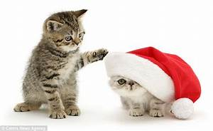 The cute Christmas pictures that will melt even the ...