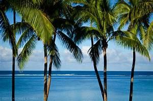 Palm Trees Tumblr Theme images