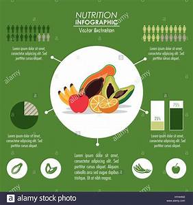 Infographic Icon  Nutrition Design  Vector Graphic Stock