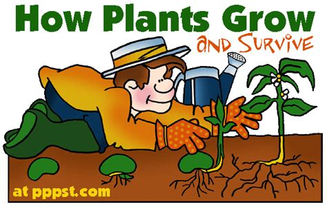 free powerpoint presentations about how plants grow and