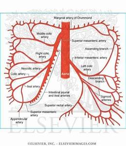 Superior and Inferior Mesenteric Arteries | Nurse ...