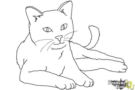 draw  cat ver  drawingnow