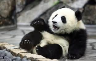 パンダ:パンダ | 毒女ニュース