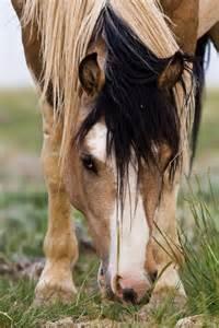Wild Paint Mustangs Horse