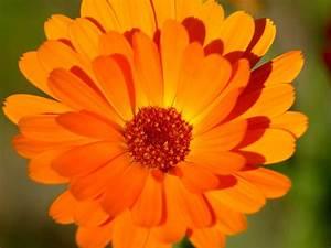 Cool Orange Flower 19350 1024x768 px ~ HDWallSource.com