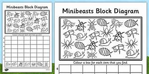 Minibeasts Primary Resources  Minibeast  Bugs  Growth  Life