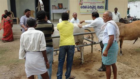 vikasa tarangini warangal conducted veterinary camps