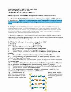 Unit 2 Dna Replication  Transcription  Translation And Protein