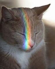 Rainbow Kitty Cat Kitten