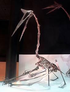 Quetzalcoatlus - Wikipedia  Quetzalcoatlus
