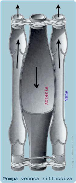 dispense idraulica idraulica circolatoria dispense medpop