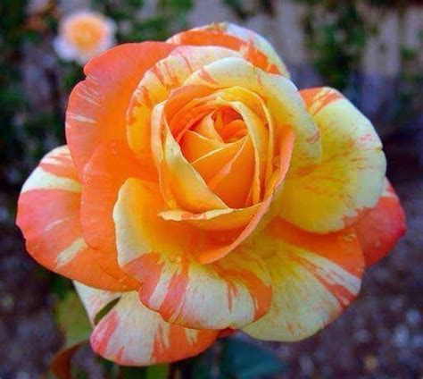 love  color  love flowers pinterest fleur