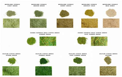 how many kinds of grass are there different types different types grass