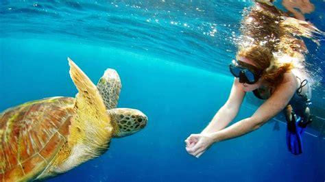 surin islands tour snorkeling experience the mega tour