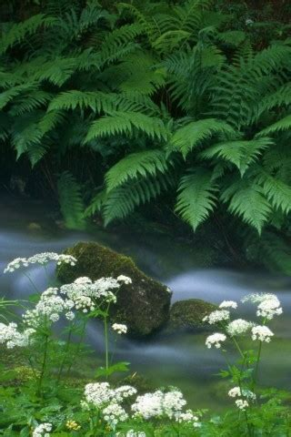 Wallpaperscataloguecom  Fern And River In 320x480