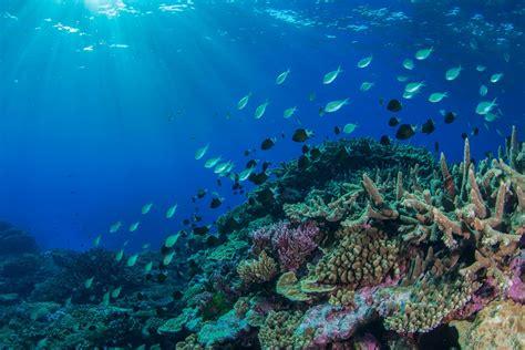 NE Australian marine heatwave shakes up coral reef animal populations - Institute for Marine and ...