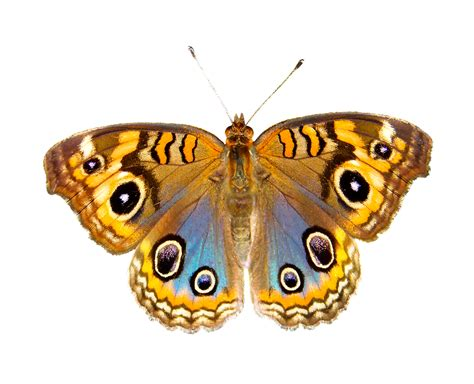 Nature Animals Butterfly · Free photo on Pixabay