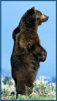 Native American Bear Spirit Animal