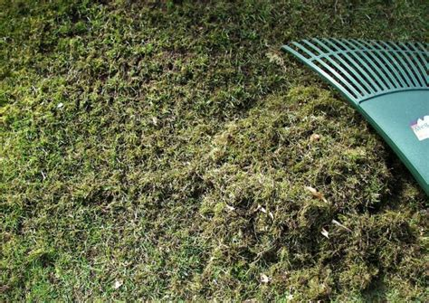 Garten Rechen Vertikutieren by Rasen Vertikutieren
