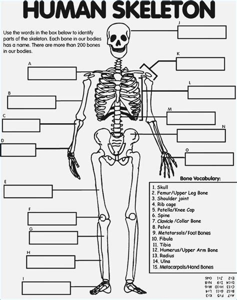 printable skeleton coloring pages  kids human