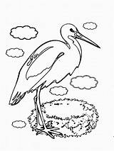 Stork Coloring Storks Birds Printable Designlooter Trailers 44kb 1200px Coloring2print Recommended sketch template