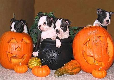 puppies  love halloween life  dogs