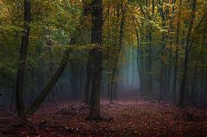 Mist, Forest, Fall, Leaves, Path, Trees, Nature, Morning