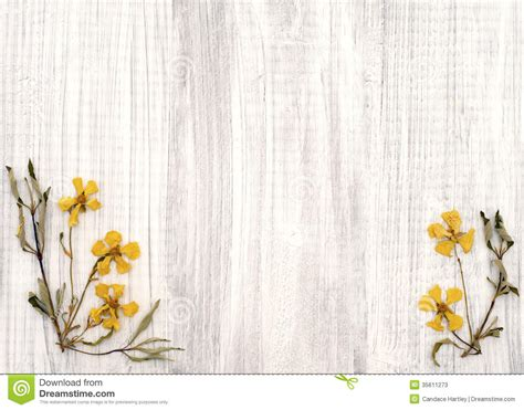 lovely rock rose dried yellow flowers  shabby chic