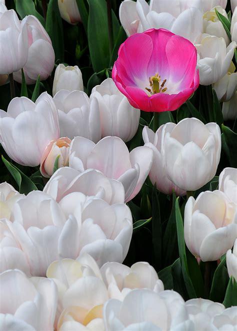 flores mais lindas  raras  mundo fotos toda atual